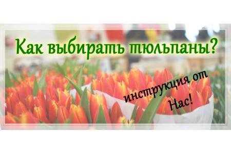 Как выбирать тюльпаны