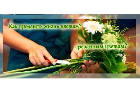 Срезанные цветы в букете могут радовать Вас долго!
