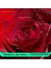 25 Бордовых роз в шляпной коробке
