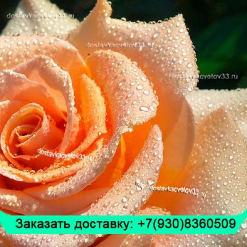 """Букет из кремовых роз (60 см) """"Воздушная акварель"""""""