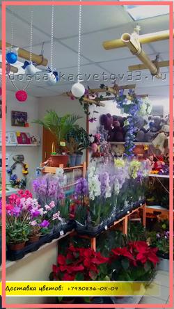 О компании - виду внутри оф-лайн магазина по продаже и доставке цветов!