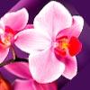 Какие цветы дарят на 14 февраля? Букет где есть орхидея. Можно просто букет из Орхидеи.