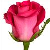 Какие цветы лучше дарить на день влюбленных? Розы - самый универсальный вариант.